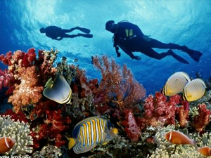 scuba diving on a reef